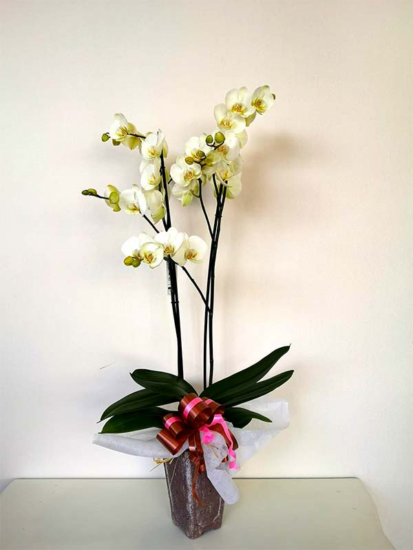 Orquídea Decorada